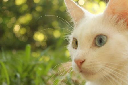 Enfoque de cámara con gato