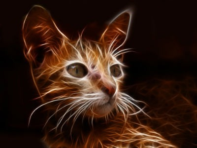 Filtro de photoshop en gato